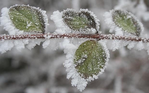 Rimfrost - Thors fotoblogg